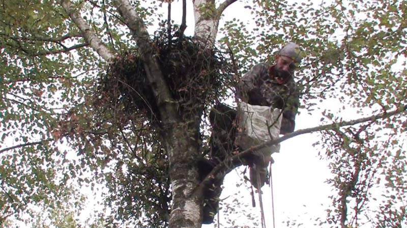 Visit to the ground of Greater Spotted Eagles (video)